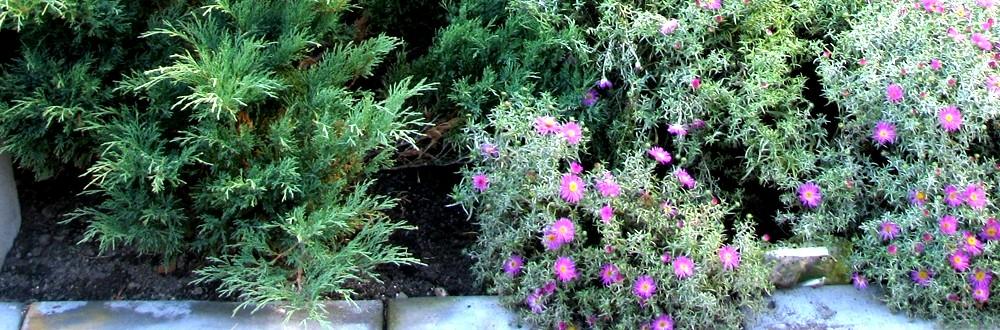 Фрагмент цветника, частный участок, Владимирская область